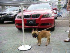 車の展示会