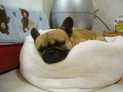 ふて寝中のワン太郎