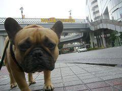 駅前交差点のワン太郎