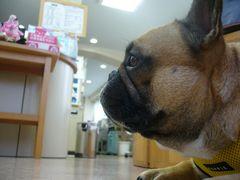 血液検査待ちのワン太郎