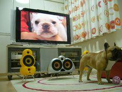 テレビとワン太郎