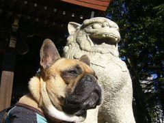 狛犬とワン太郎