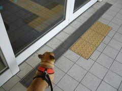 自動ドア前のワン太郎