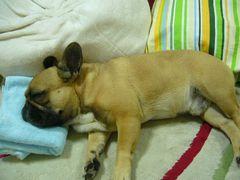 ごろ寝中のワン太郎