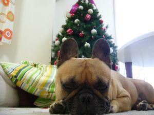 クリスマスツリーとワン太郎