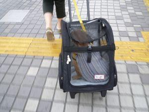 コロコロキャリーに乗るワン太郎1