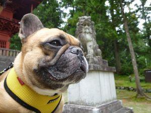 岩木山神社 狛犬そば