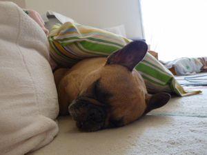 ヘンテコな寝床で寝るワン太郎1