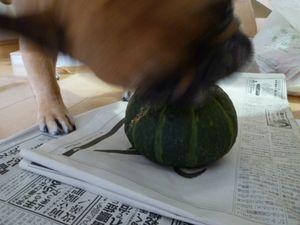 かぼちゃをかじるワン太郎