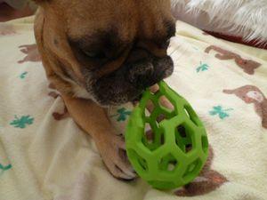 ボールで遊ぶワン太郎