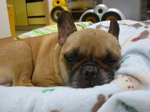 寝てるワン太郎
